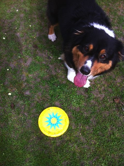 rose-and-frisbee